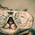 Brillen-Damen: Wie wählen Sie Ihren Rahmen?