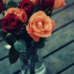 Schöne frische Rosen kaufen